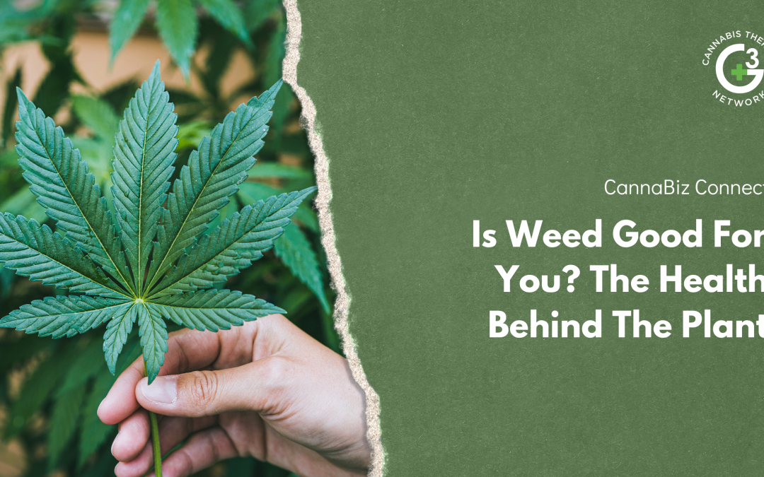 Is Weed Good For You? The Health Behind The Plant